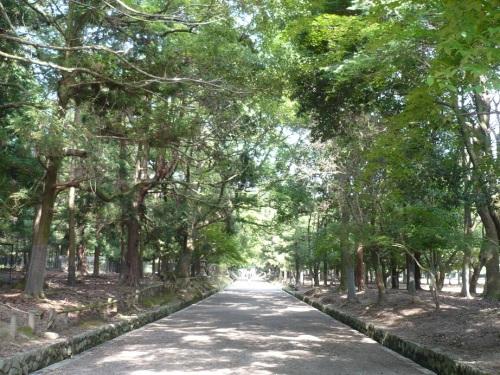 Path to Kasuga Taisha