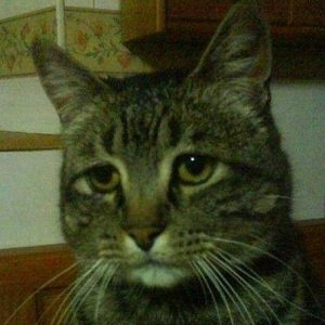 comedown cat